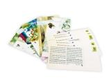 Postkartengeschichten - Die kleine Biene Osmia